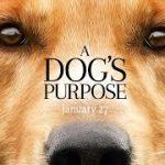 『野良犬トビーの愛すべき転生』待望の映画化!『A Dog's Purpose(原題)』公開直前にかけられた「動物虐待疑惑」の真相